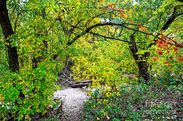 Fall Art Print featuring the photograph Poudre Walk by Baywest Imaging