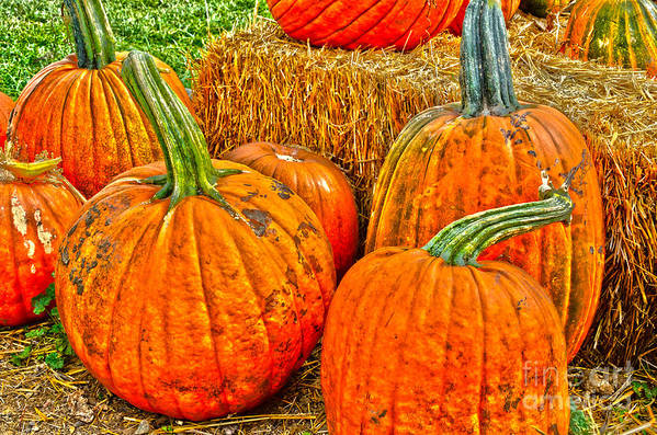 Pumpkins Print featuring the photograph Pumpkin by Baywest Imaging