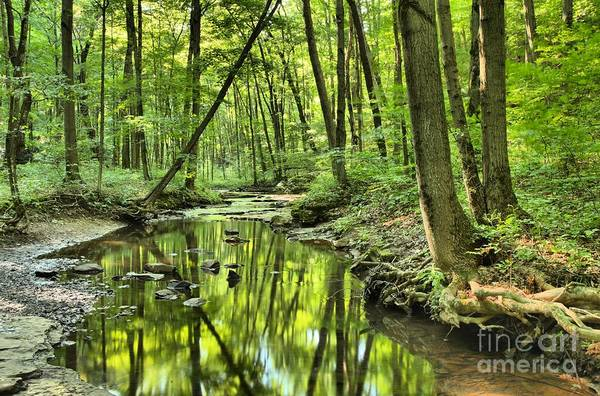 Hells Hollow Art Print featuring the photograph Reflections Of Tranquility by Adam Jewell