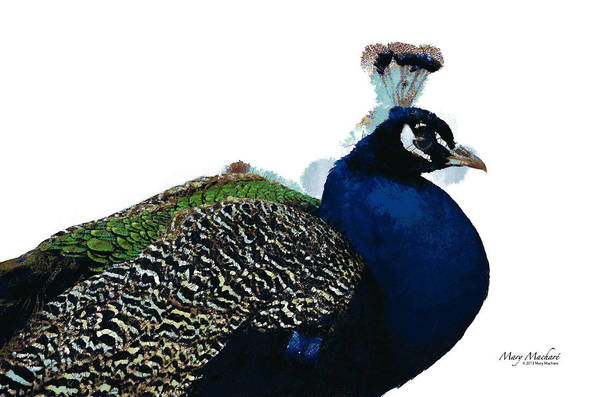 Regal Peacock Art Print featuring the digital art Regal Peacock by Mary Machare