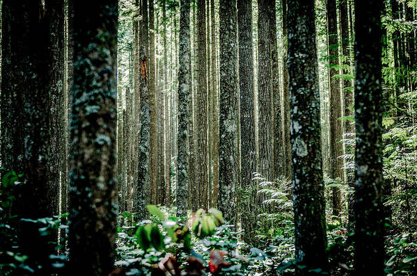 Issaquah Art Print featuring the photograph Seeing The Forest With The Trees by Brian Xavier