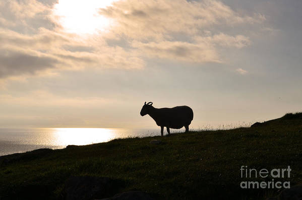 Sheep Art Print featuring the photograph Sheep Silhouetted By Neist Point On Skye by DejaVu Designs