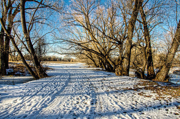 Snow Fort Collins Art Print featuring the photograph Snow Road by Baywest Imaging