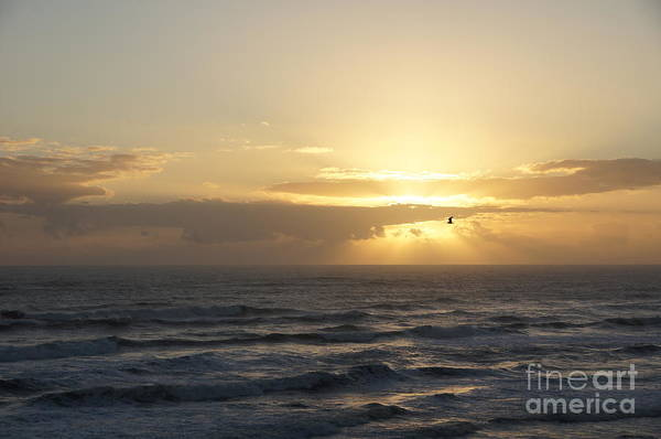 Sunrise Art Print featuring the photograph Soaring Sunrise by Megan Cohen
