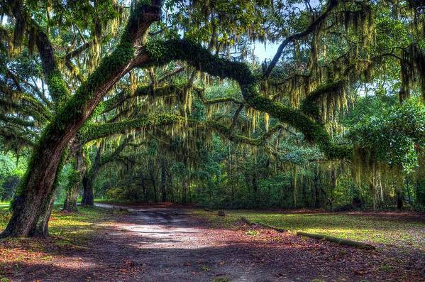 Spanish Moss Print featuring the photograph Spanish Moss by Mel Steinhauer