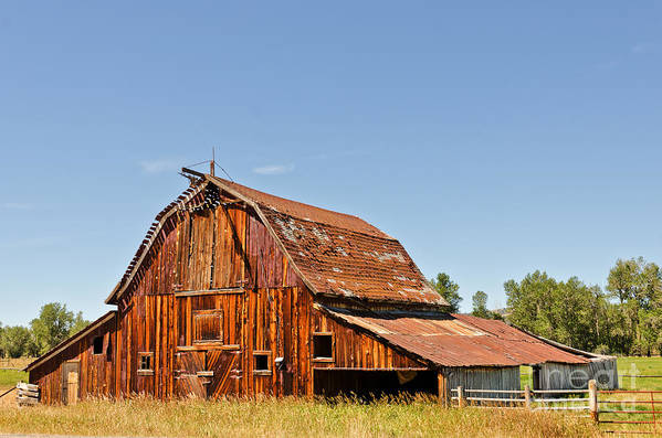 Montana Art Print featuring the photograph Sunlit Barn by Sue Smith
