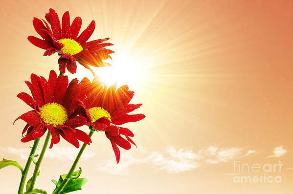 Background Art Print featuring the photograph Sunrays Flowers by Carlos Caetano