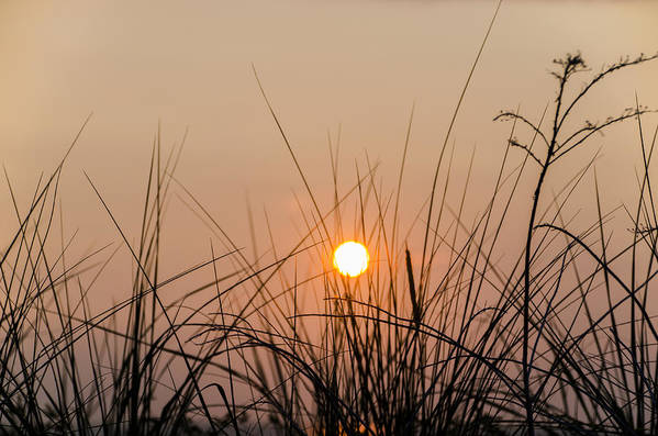 Sunset Print featuring the photograph Sunset Through The Grass - Villas New Jersey by Bill Cannon