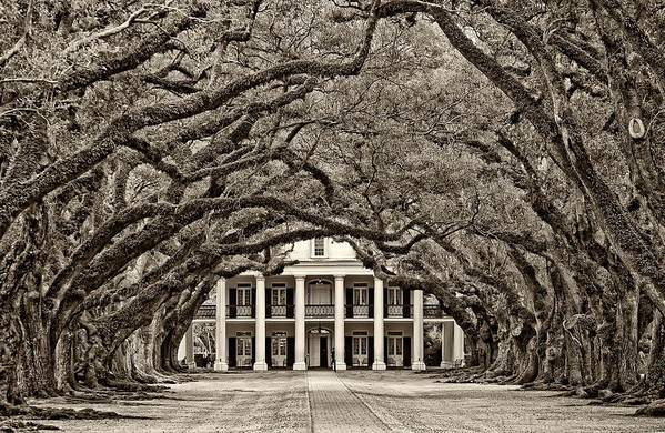 Oak Alley Plantation Art Print featuring the photograph The Old South Sepia by Steve Harrington