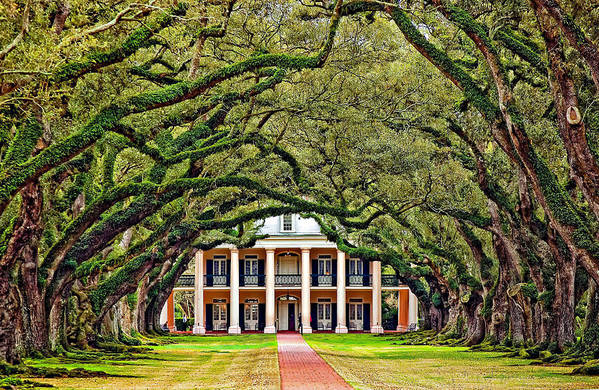 Oak Alley Plantation Art Print featuring the photograph The Old South by Steve Harrington