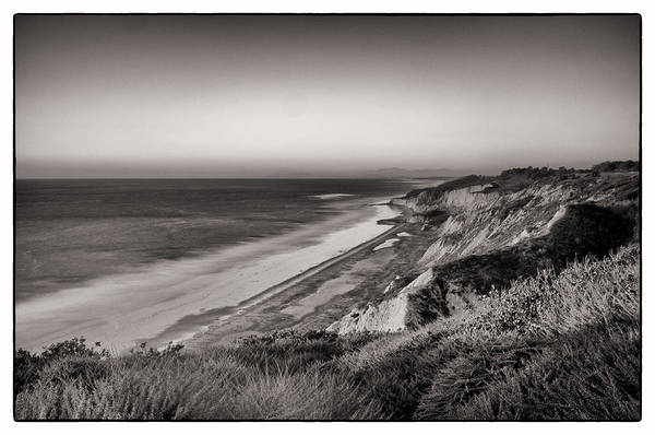 Torrey Pines Art Print featuring the photograph Torrey Pines by Tanya Harrison