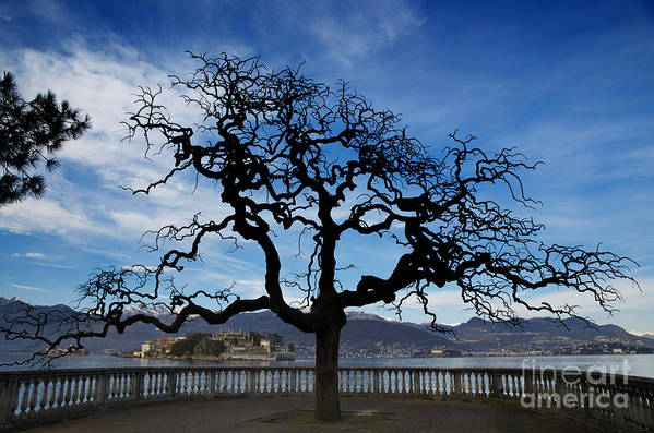 Tree Art Print featuring the photograph Tree And Borromee Islands by Mats Silvan