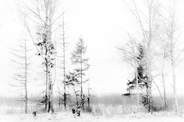 Jenny Rainbow Fine Art Photography Art Print featuring the photograph Winter Drawing by Jenny Rainbow