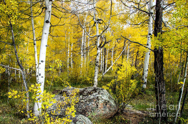 Fall Color Art Print featuring the photograph Yellow Forest by Baywest Imaging