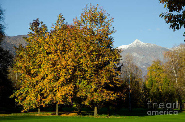 Autumn Art Print featuring the photograph Autumn Trees by Mats Silvan