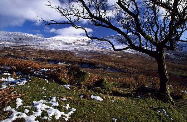Bare Art Print featuring the photograph Comeragh Mountains, County Waterford by Richard Cummins