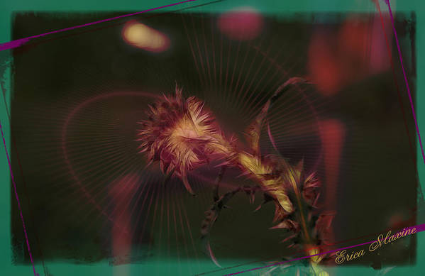 Thistle Art Print featuring the photograph Thistle by Ericamaxine Price