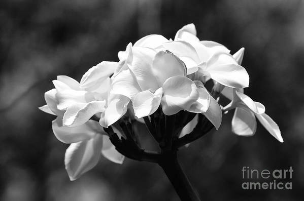 Nature Art Print featuring the photograph White by Karl Voss