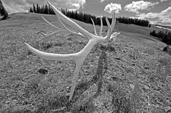 Yellowstone Art Print featuring the photograph Elk by Elijah Weber