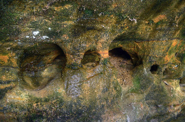 Art Print featuring the photograph Ash Cave by Brian Stevens