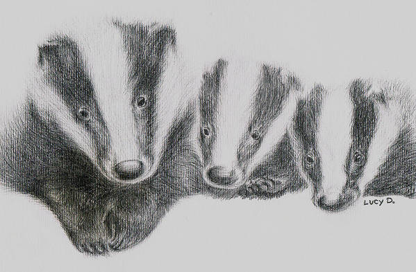 Badgers Art Print featuring the drawing Badgers by Lucy D