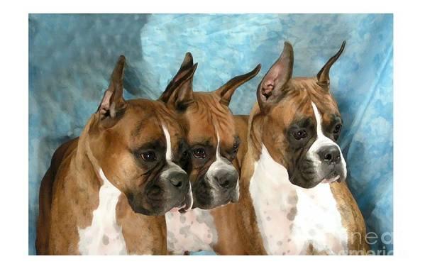 Boxer Digital Art Art Print featuring the digital art Boxer 655 by Larry Matthews