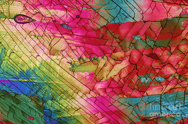 Caffeine Art Print featuring the photograph Caffeine by Michael W. Davidson