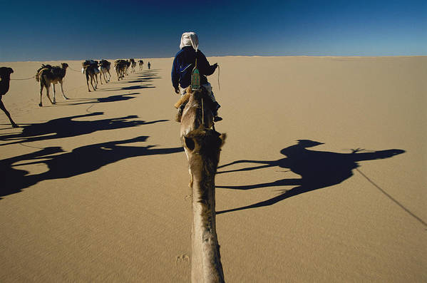 Color Image Art Print featuring the photograph Camel Caravan And Their Shadows by Carsten Peter