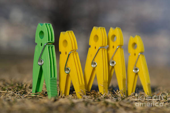 Clothespin Art Print featuring the photograph Clothespin by Mats Silvan