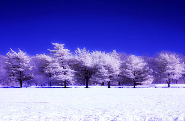 Winter Trees Art Print featuring the photograph Color Infrared Winter Trees by Angela Rose