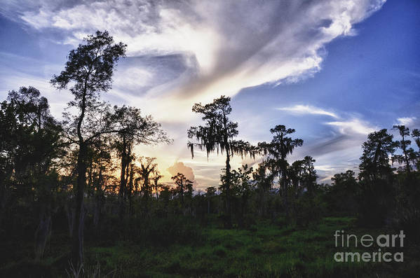New Orleans Art Print featuring the photograph Destrehan Swamp Sunset by Jeanne Woods