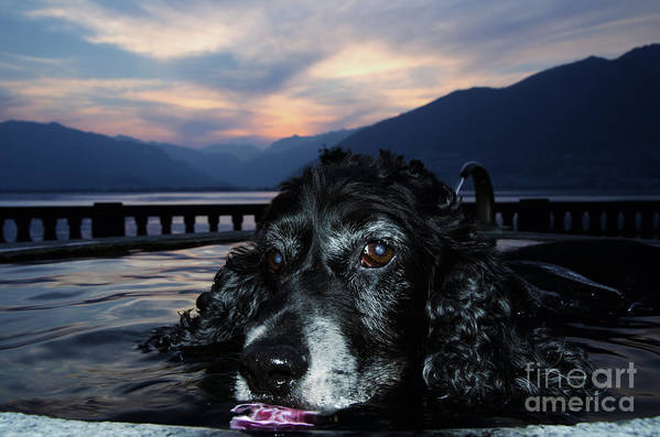 Dog Art Print featuring the photograph Dog In A Water Fountain by Mats Silvan