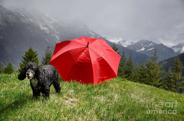 Dog Art Print featuring the photograph Dog On The Top Of A Mountain by Mats Silvan