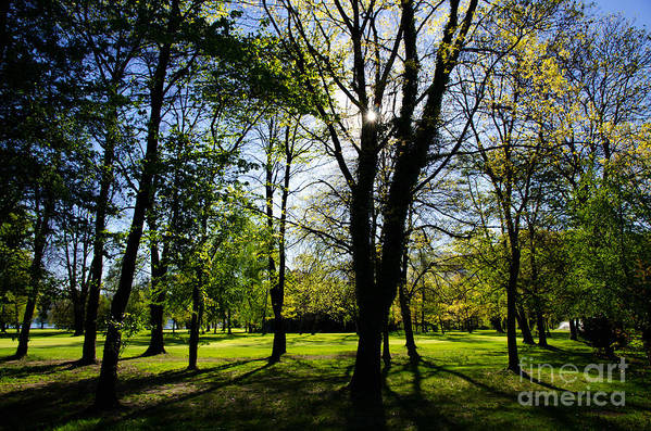 Trees Art Print featuring the photograph Forest by Mats Silvan