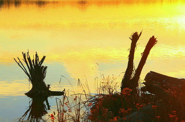 Golden Sunset Art Print featuring the photograph Golden Silhouette by Don Downer