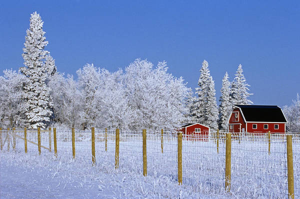 Barns Art Print featuring the photograph Hoarfrost On Trees Around Red Barns by Mike Grandmailson