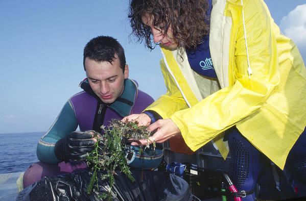 Alga Art Print featuring the photograph Invasive Seaweed Control by Alexis Rosenfeld