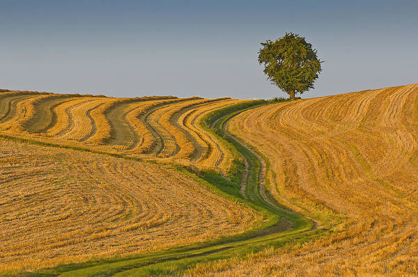 Horizontal Art Print featuring the photograph Mein Lieblingsweg (my Favorite Path) by Alf