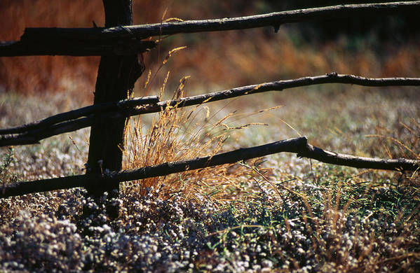 Grassland Art Print featuring the photograph Morning Grass by Carlos Diaz
