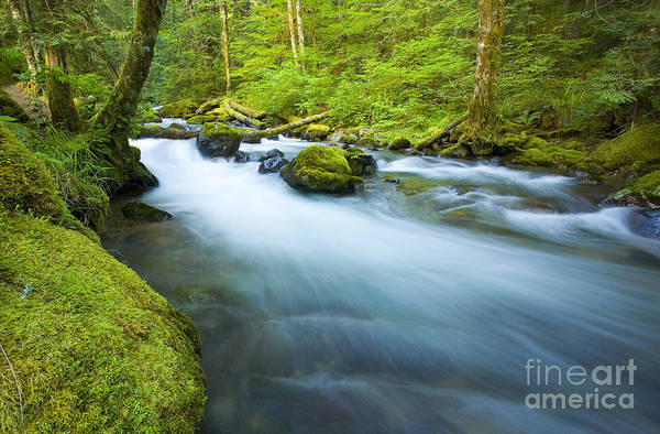 Skate Creek Print featuring the photograph Out Of The Rainforest by Mike Dawson