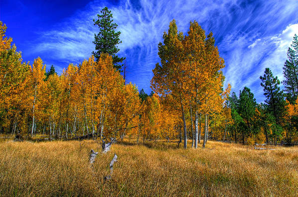 Aspen Trees Art Print featuring the photograph Sierra Nevada Fall Colors Lake Tahoe by Scott McGuire