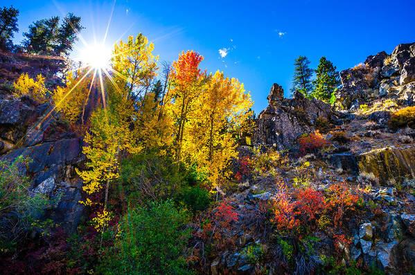 Aspen Trees Art Print featuring the photograph Sierra Nevada Fall Colors Lassen County California by Scott McGuire