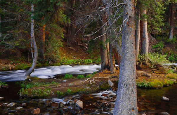 Forest Art Print featuring the photograph Somewhere In The Forest by Tim Reaves