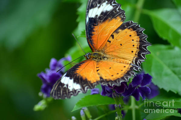 Butterfly Art Print featuring the photograph Sweet Nectar by Richard Ortolano