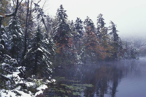 Wintry Art Print featuring the photograph Tall Pines By A Lake by David Chapman