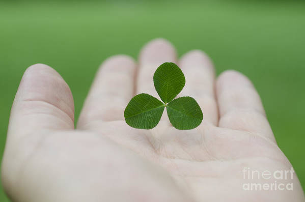 Three Leaf Clover Art Print featuring the photograph Three Leaf Clover by Mats Silvan