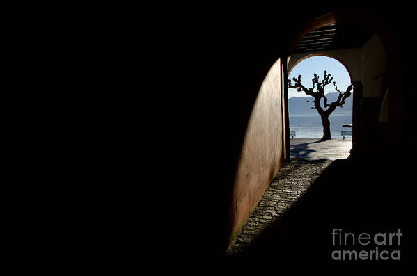 Tree Art Print featuring the photograph Tree And Arch by Mats Silvan