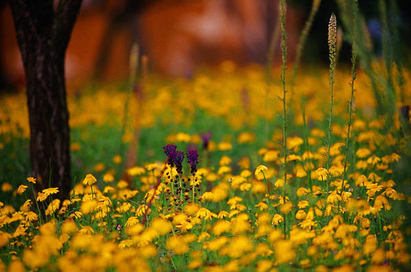 Italy Art Print featuring the photograph Vesuvius Wildflowers by Carlos Diaz