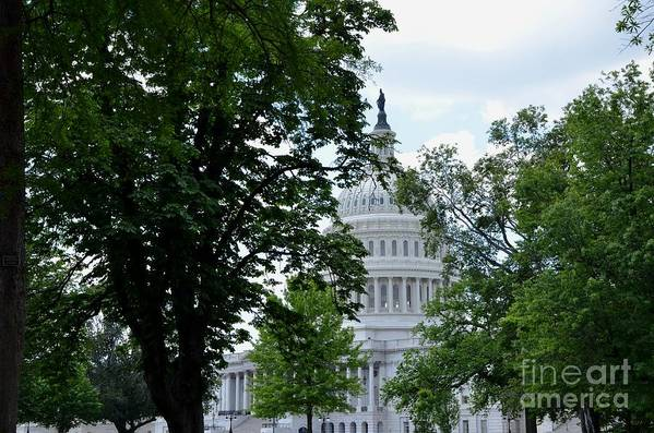 Us Capitol Art Print featuring the photograph View Through Trees by Pravine Chester
