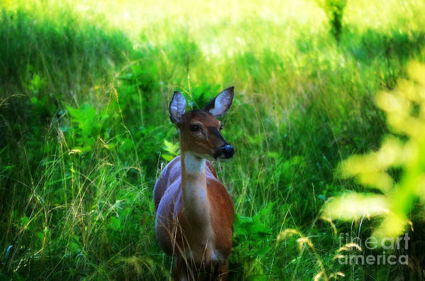 Landscape Art Print featuring the photograph Young Deer by Peggy Franz